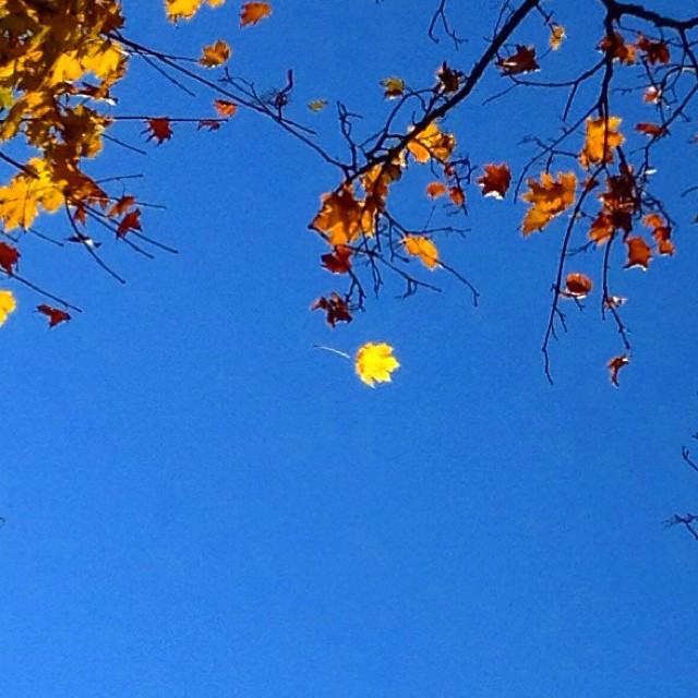 which gets to choose this -breeze, leaf, bough?- as the moment -now- of letting go