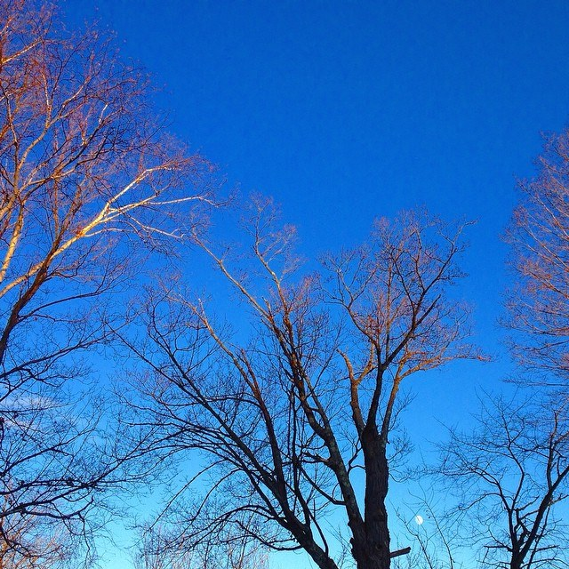 today in the sky: 'believe-again blue.' on the branches, the light rewired your blindness, while the moon waited patiently for its turn in your eyes.
