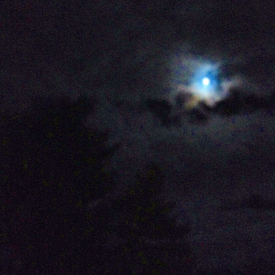 Listing on her cloud the knowing moon seduces both the lonely pines